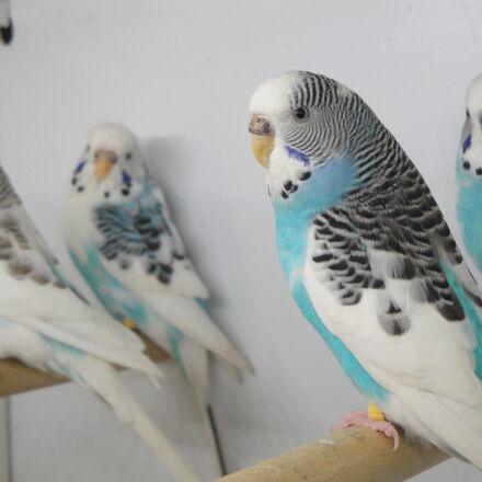 cage, parakeet, pets, Sony DSC-W270