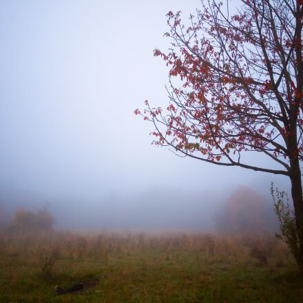 tree, autumn, fog, Panasonic DMC-GF2