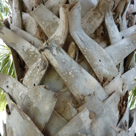 tree bark, texture, nature, Panasonic DMC-TZ6
