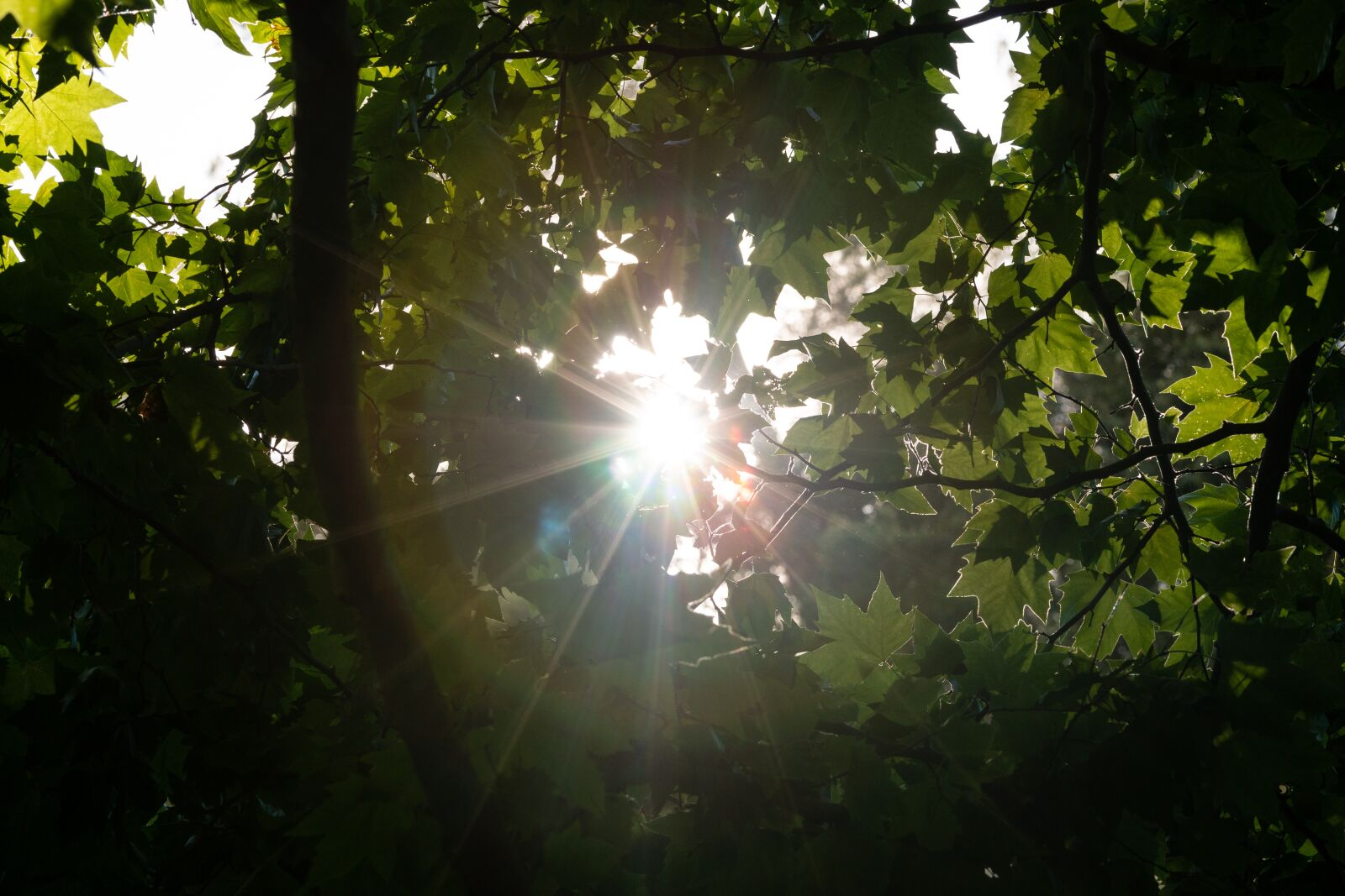 """Canon EOS 70D sample photo. """"Sun, tree leaves, nature"""" photography"""