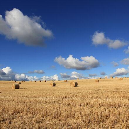 hays, on, grass, field, Canon EOS 550D