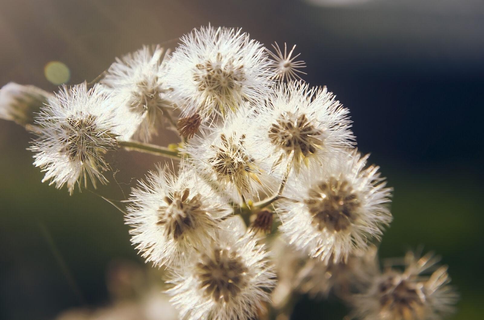 "Nikon D5100 sample photo. ""Flowers, flower, winter, dawn"" photography"