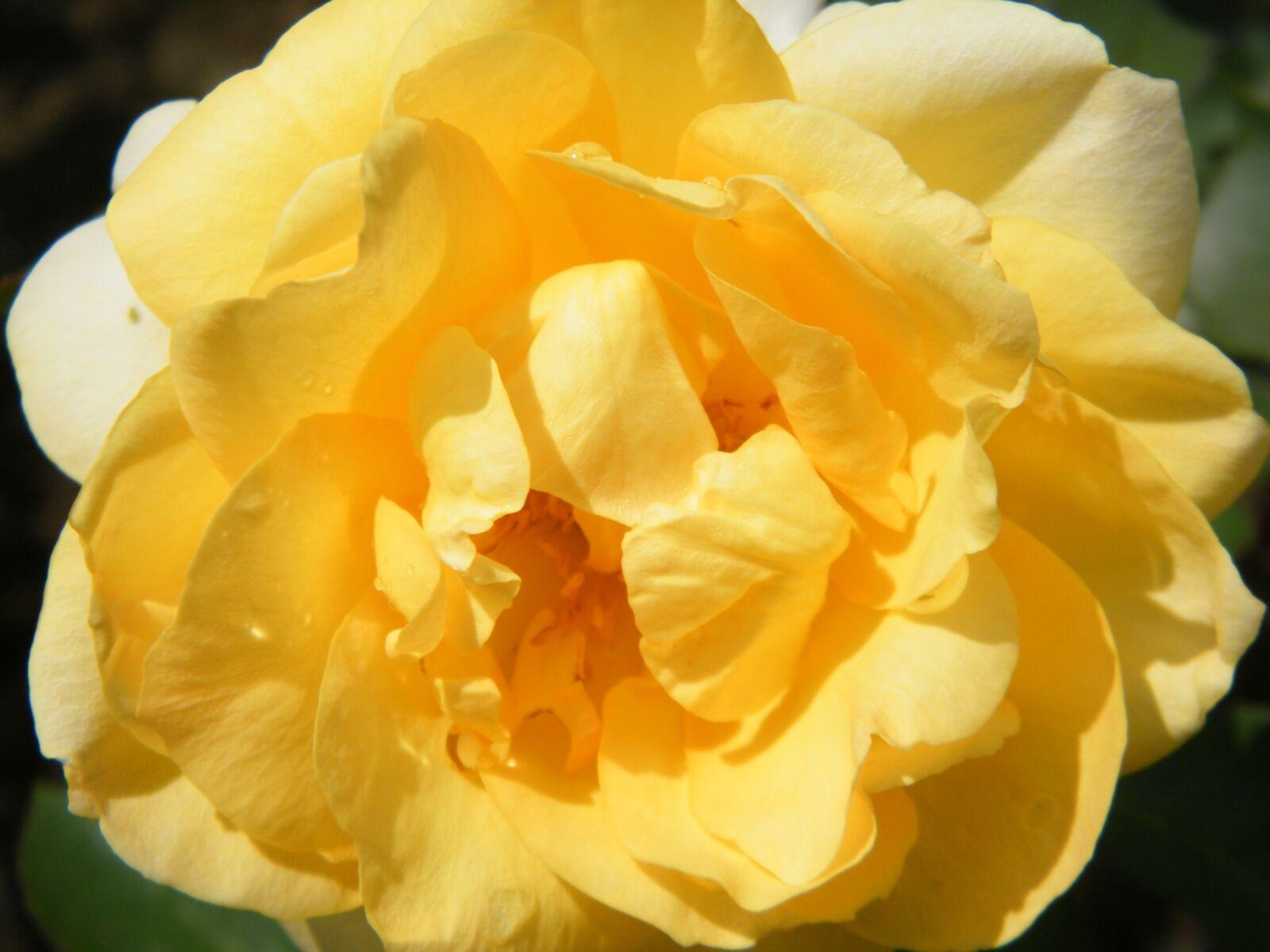 "Fujifilm FinePix S2000HD sample photo. ""Flower, yellow, macro"" photography"