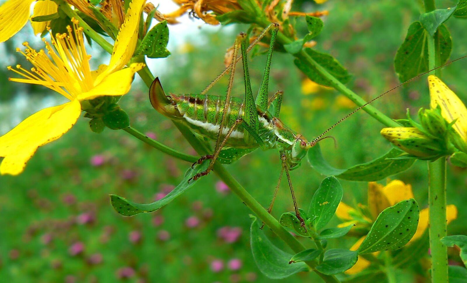 "Panasonic DMC-FZ7 sample photo. ""Nature, leaf, flora"" photography"