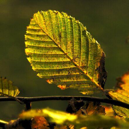 leaf, nature, plant, Samsung NX5