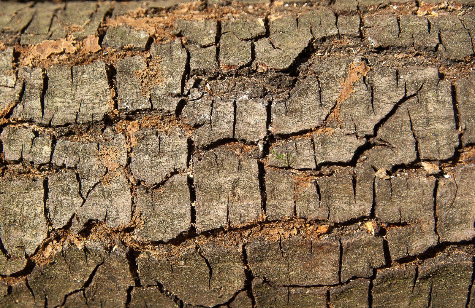 "Pentax K10D sample photo. ""Bark, wood, material"" photography"