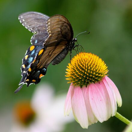 butterfly, moth, nature, Canon EOS REBEL T1I
