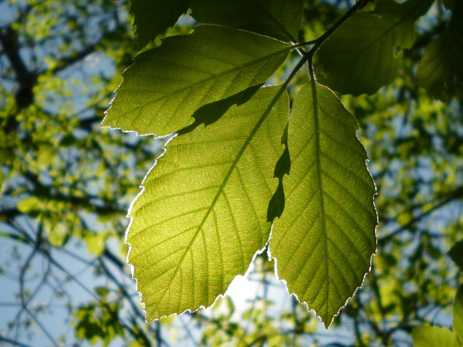 "Panasonic DMC-FH5 sample photo. ""Leaf, natural, vivid"" photography"