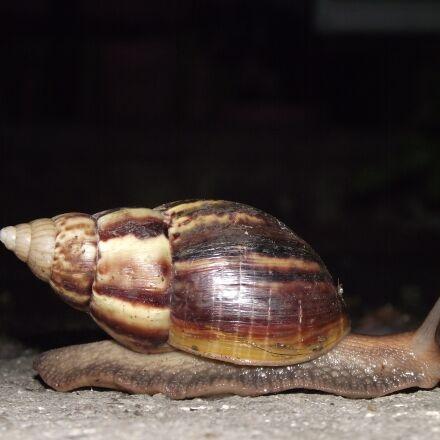 snail, hoi thailand, hoiklang, Fujifilm FinePix S1800