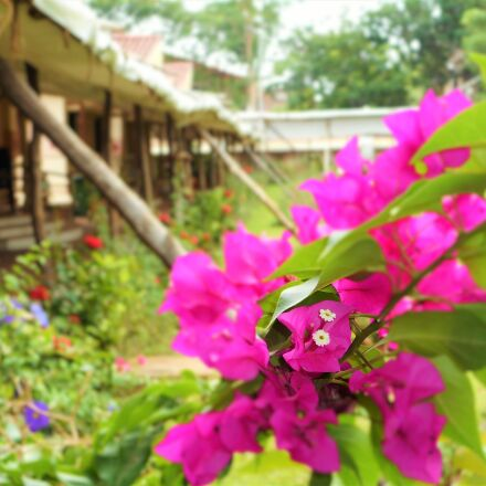 buds, flowers, garden, green, Nikon COOLPIX A300