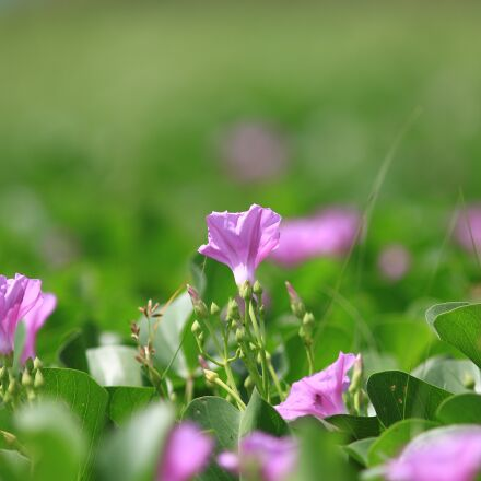 flowers, flower, blossoming, Canon EOS 70D