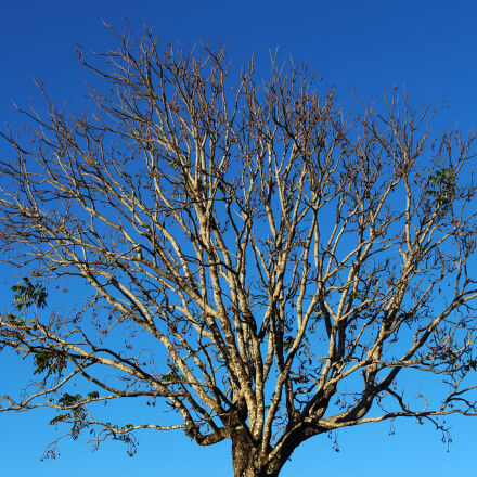 tree, Canon EOS REBEL T5I