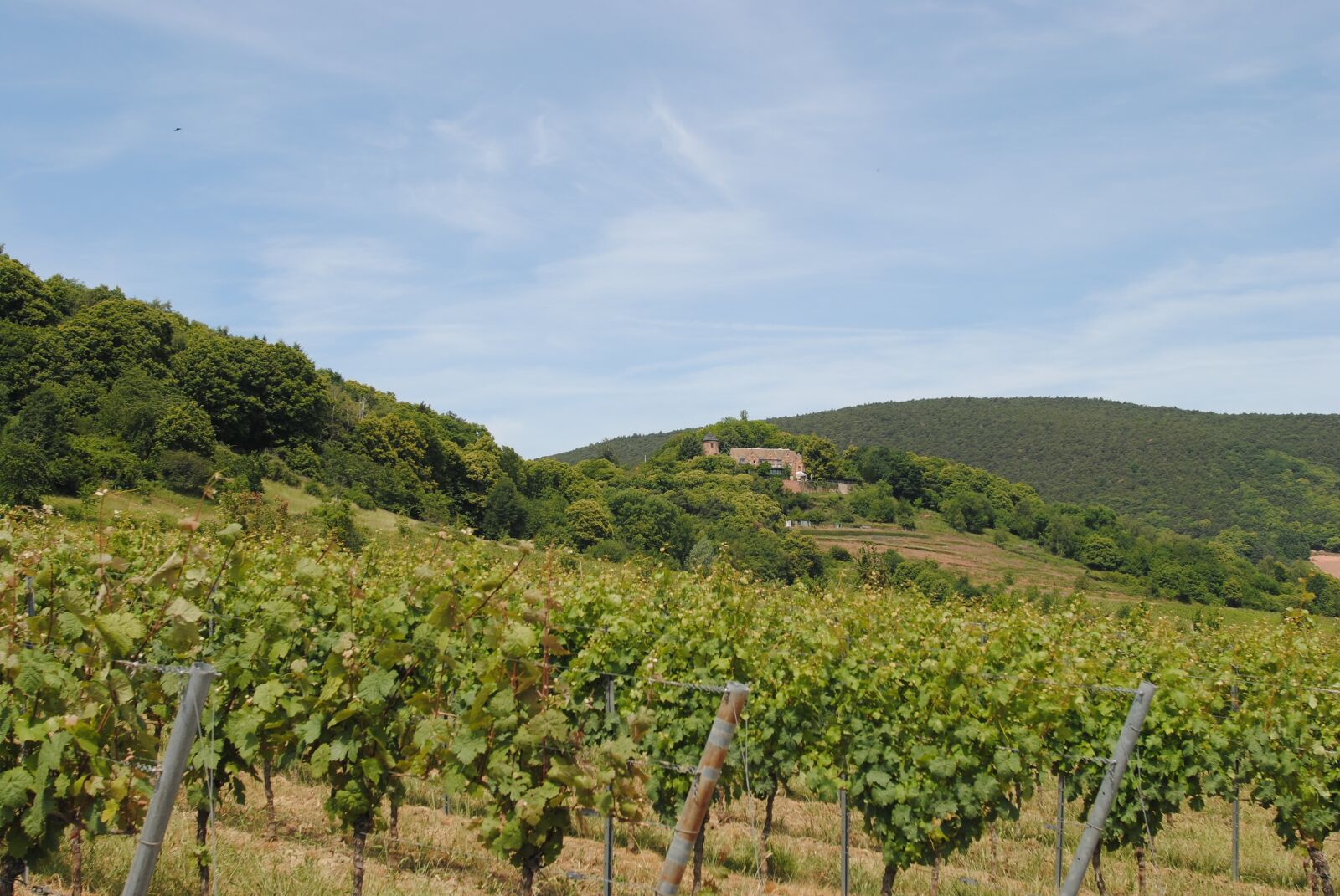 "Nikon D3000 sample photo. ""Palatinate, vineyard, kropsburg"" photography"