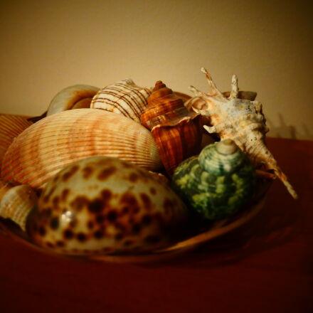 shells, Panasonic DMC-GH4