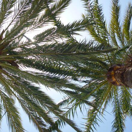 palm, sunlight, summer, Panasonic DMC-FS16