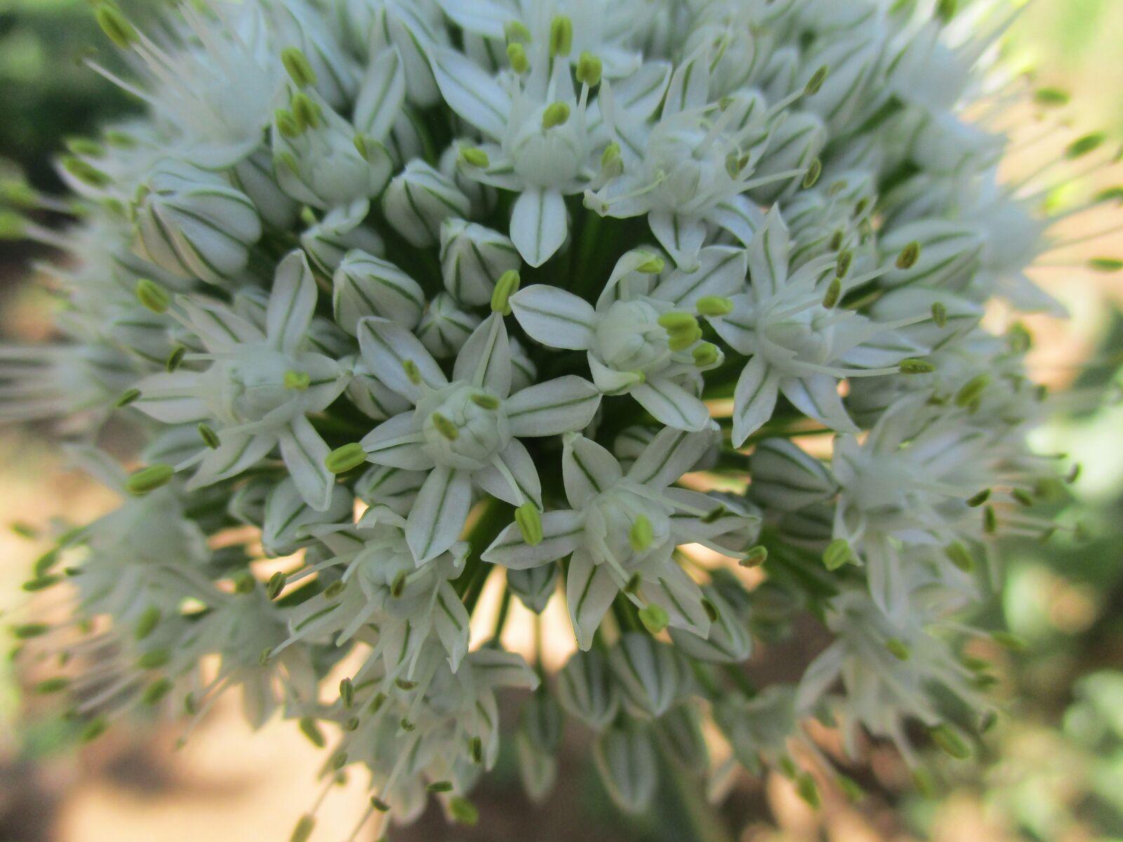 flower, white, spring