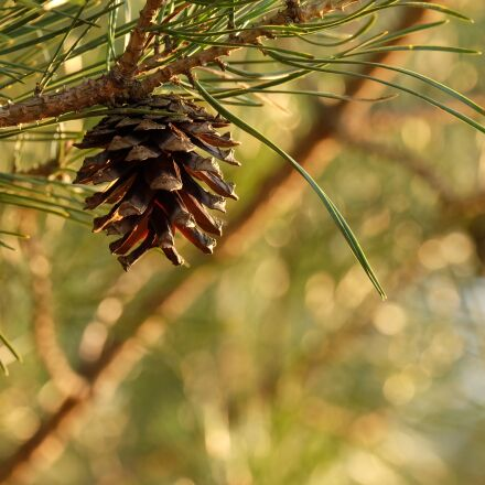 pineapple, nature, tree, Fujifilm X-A1