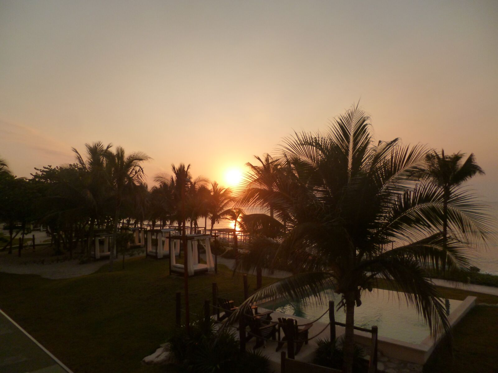 sunset, tropics, palms