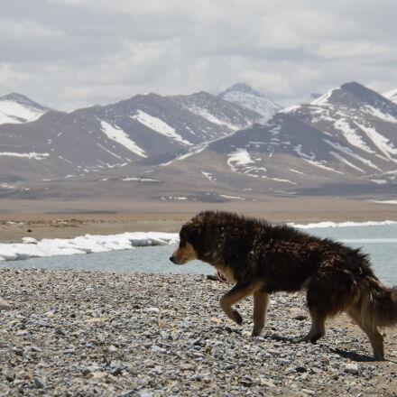 dog, ice, Nikon D5100