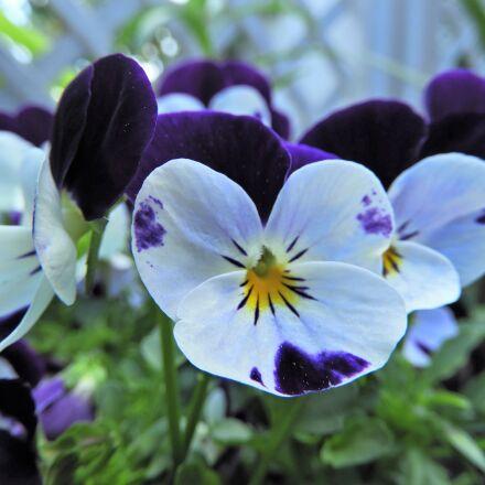 blossom, bloom, flower, Nikon COOLPIX B700