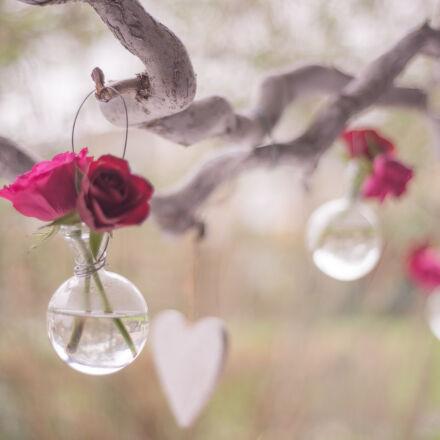love, celebrate, valentine, happy, Nikon D600