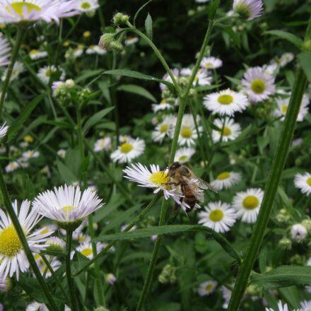 outdoor, nature, flora, Sony DSC-T70