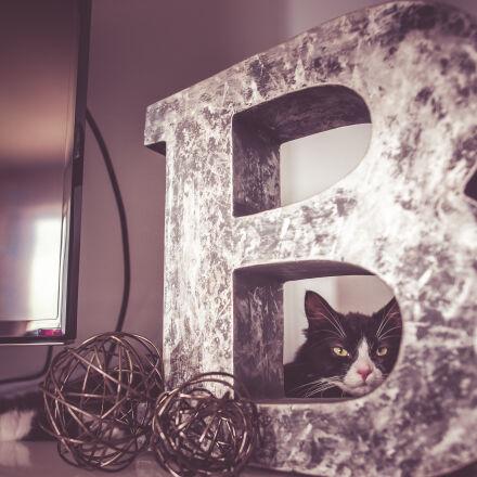 animal, art, beautiful, cat, Nikon D610
