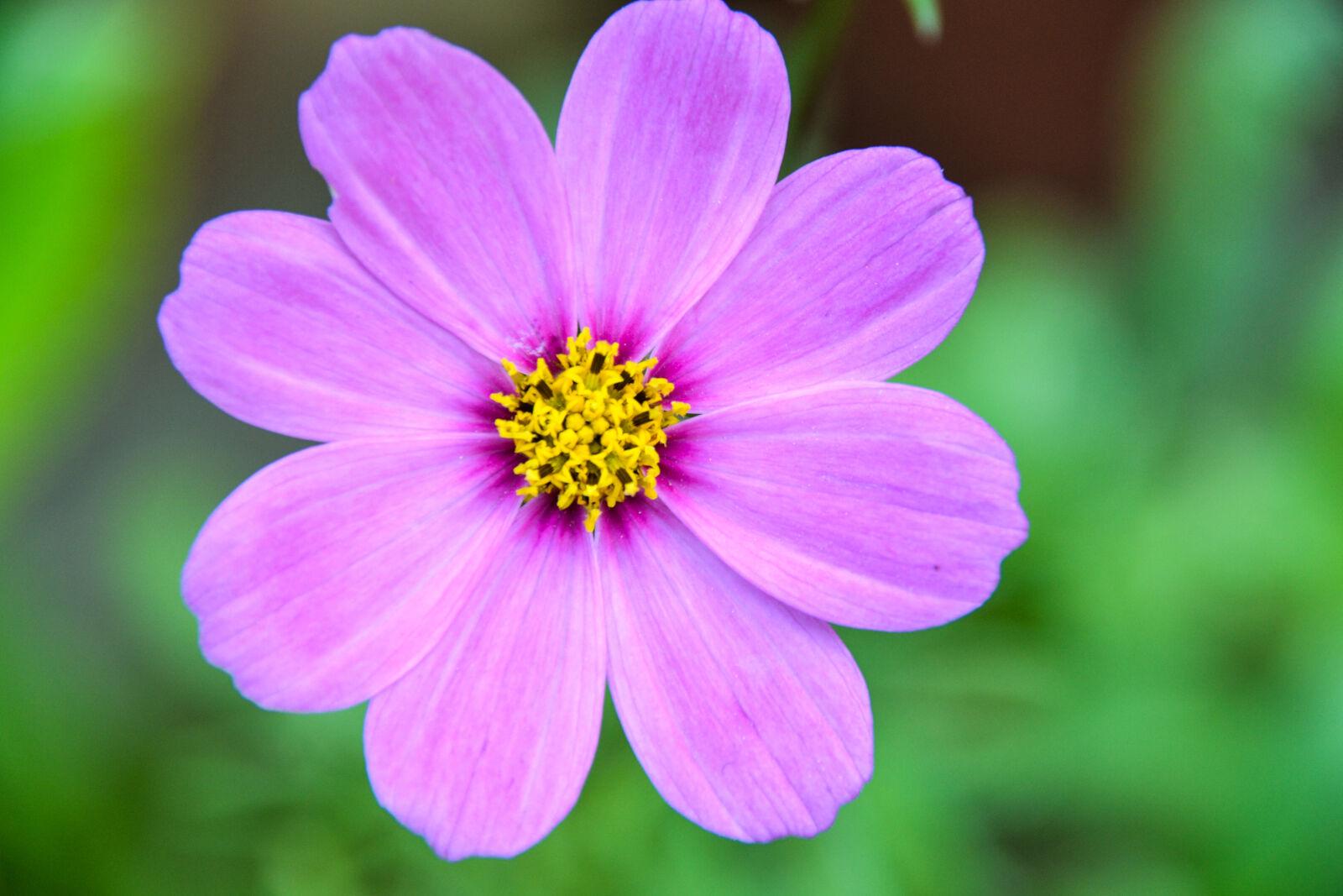 "Nikon D3100 sample photo. ""Flower, green, pink, flower"" photography"