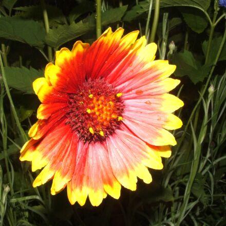 flower, red flower, flowers, Fujifilm FinePix S3500
