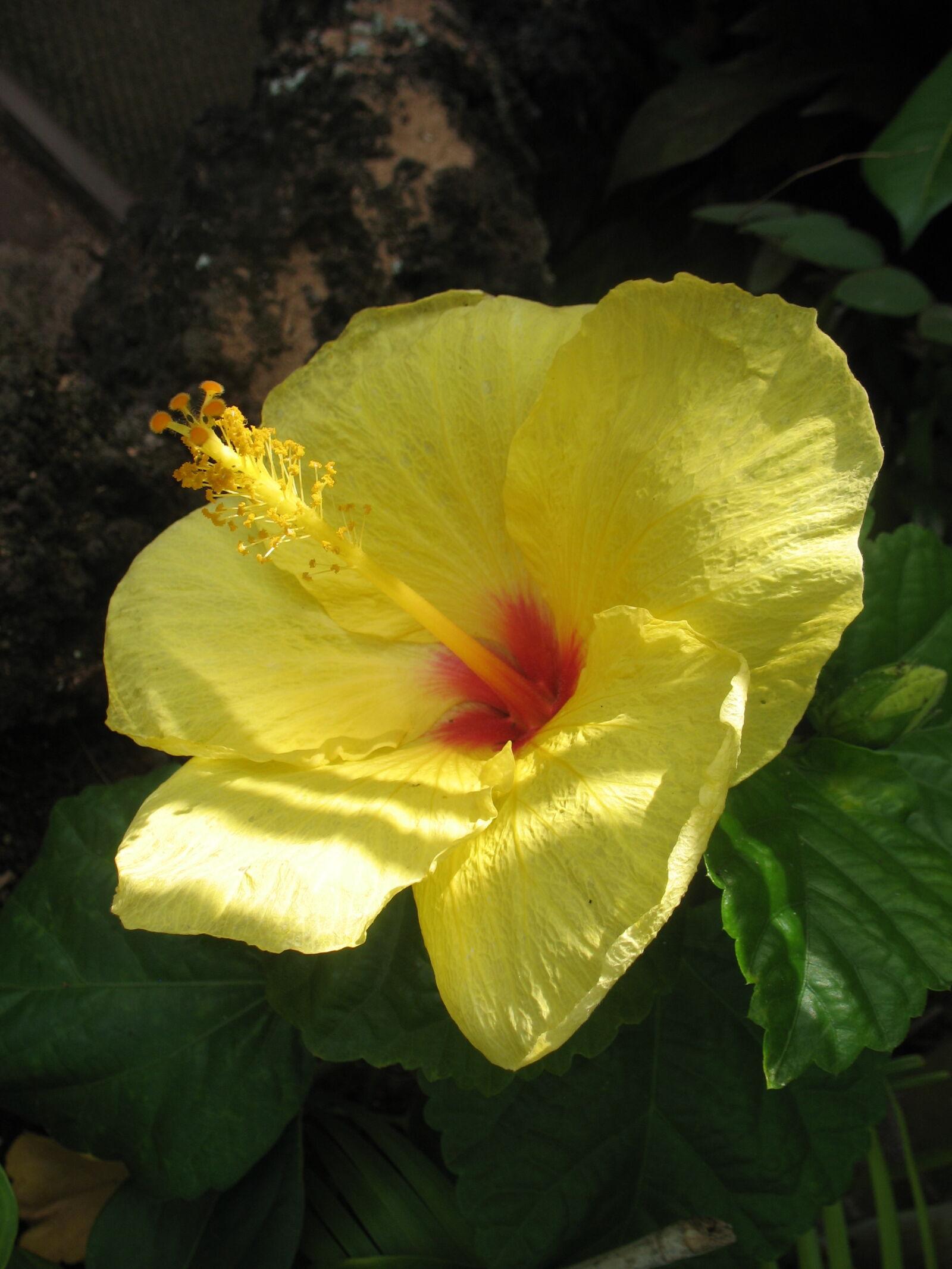 "Canon POWERSHOT A620 sample photo. ""Flower, maui, tropical"" photography"
