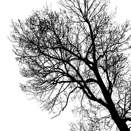 tree, branch, trunk, Canon EOS 60D