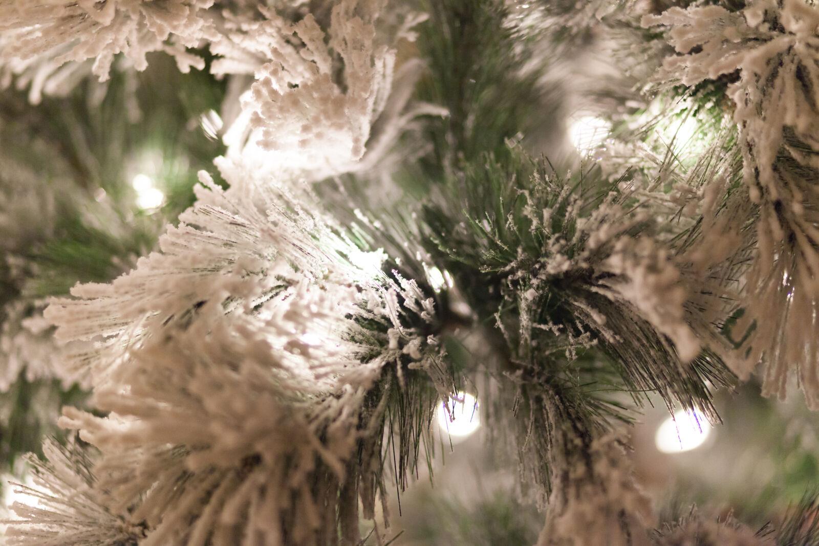 holiday, tree, holiday, lights