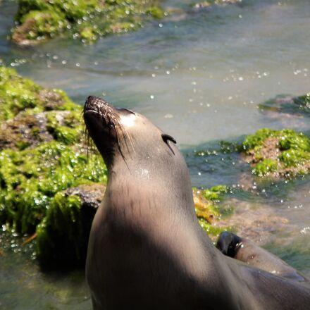 seal, water, beach, Canon EOS 1300D