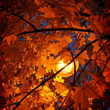 autumn, leaves, autumn leaves, Sony ILCE-3000