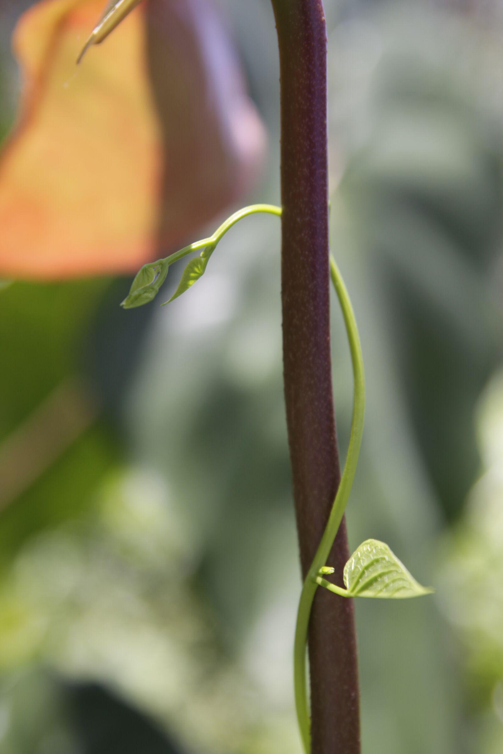 """Canon EOS 50D sample photo. """"Garden, germ, green"""" photography"""