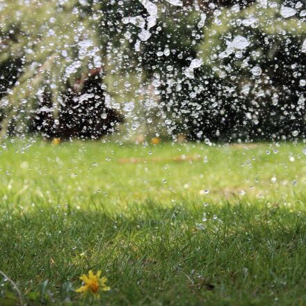 water, watering, drop, Canon EOS 1300D
