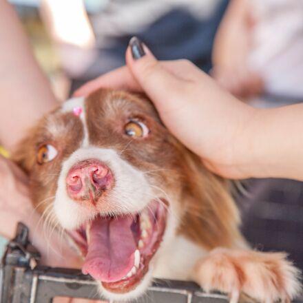 dog, volunteer, pet, Canon EOS 5D