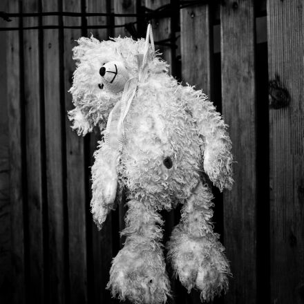 suicide, bear cub, depressed, Panasonic DMC-G2