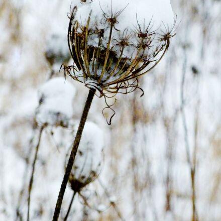 winter, frost, cold, Panasonic DMC-FS35