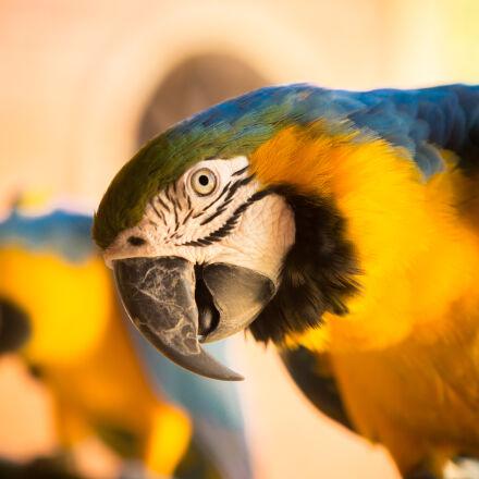 animal, bird, close, up, Canon EOS 5D MARK III