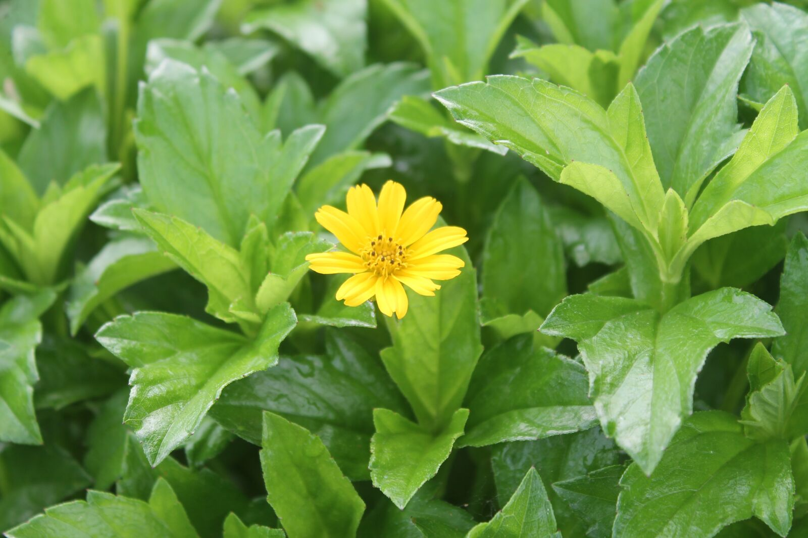 """Canon EOS 1100D (EOS Rebel T3 / EOS Kiss X50) sample photo. """"Flowers, flower, plant"""" photography"""