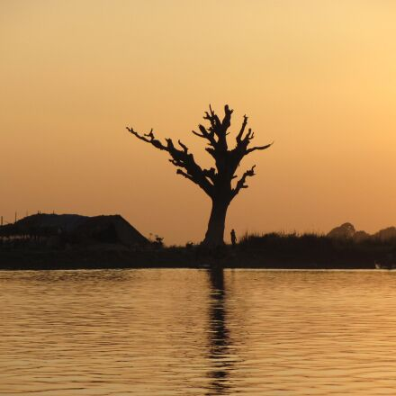 old tree, water, sunset, Canon POWERSHOT SX120 IS
