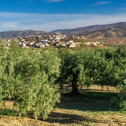landscape, travel, olive trees, Sony ILCE-6000