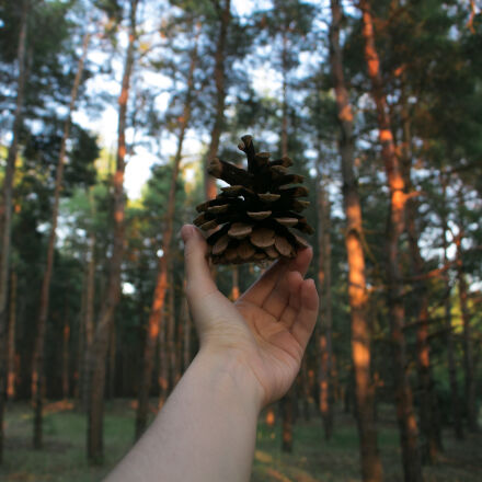 forest, hand, nature, pinecone, Canon EOS 700D