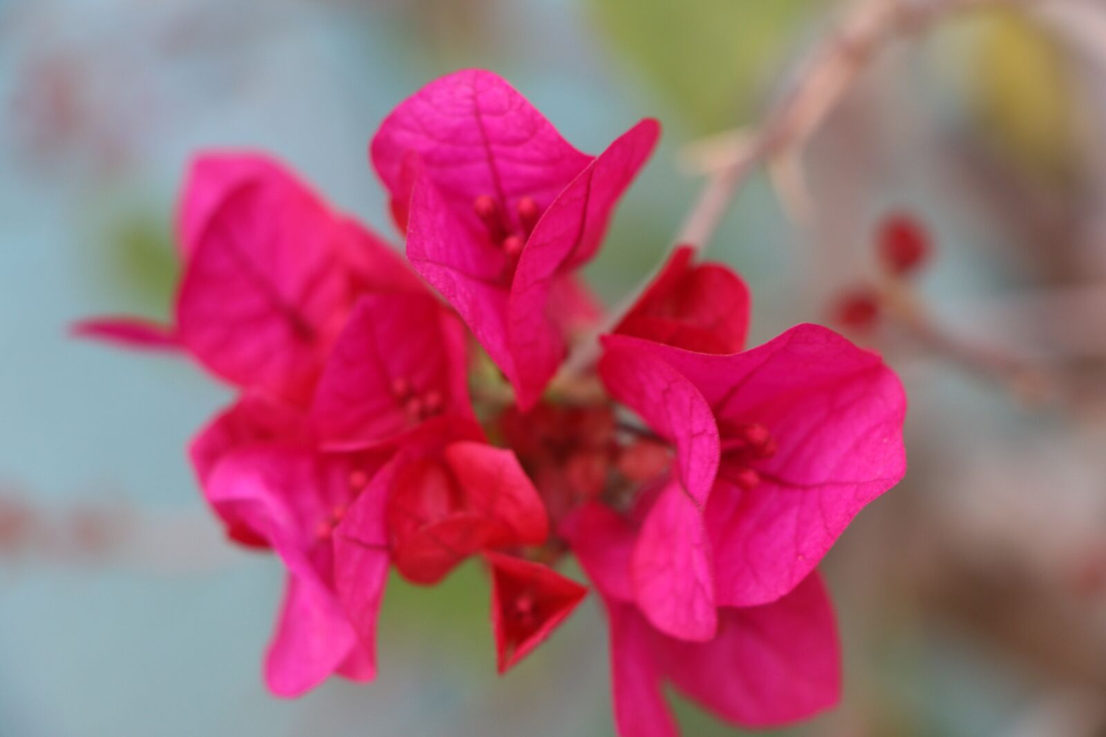"""Canon EOS 70D sample photo. """"Flower, red, blossom"""" photography"""