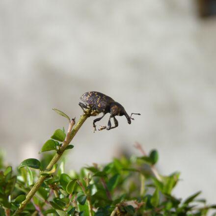 nature, insect, Panasonic DMC-FZ38