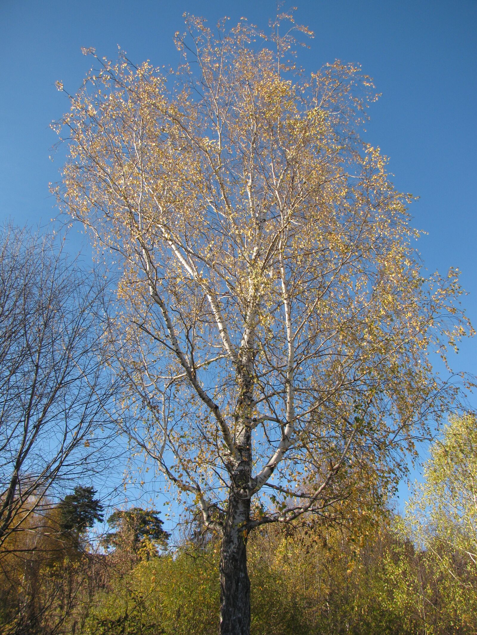 "Canon PowerShot SX110 IS sample photo. ""Autumn, tree, nature"" photography"