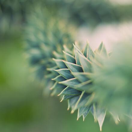 green, succulent, plant, in, Nikon D300
