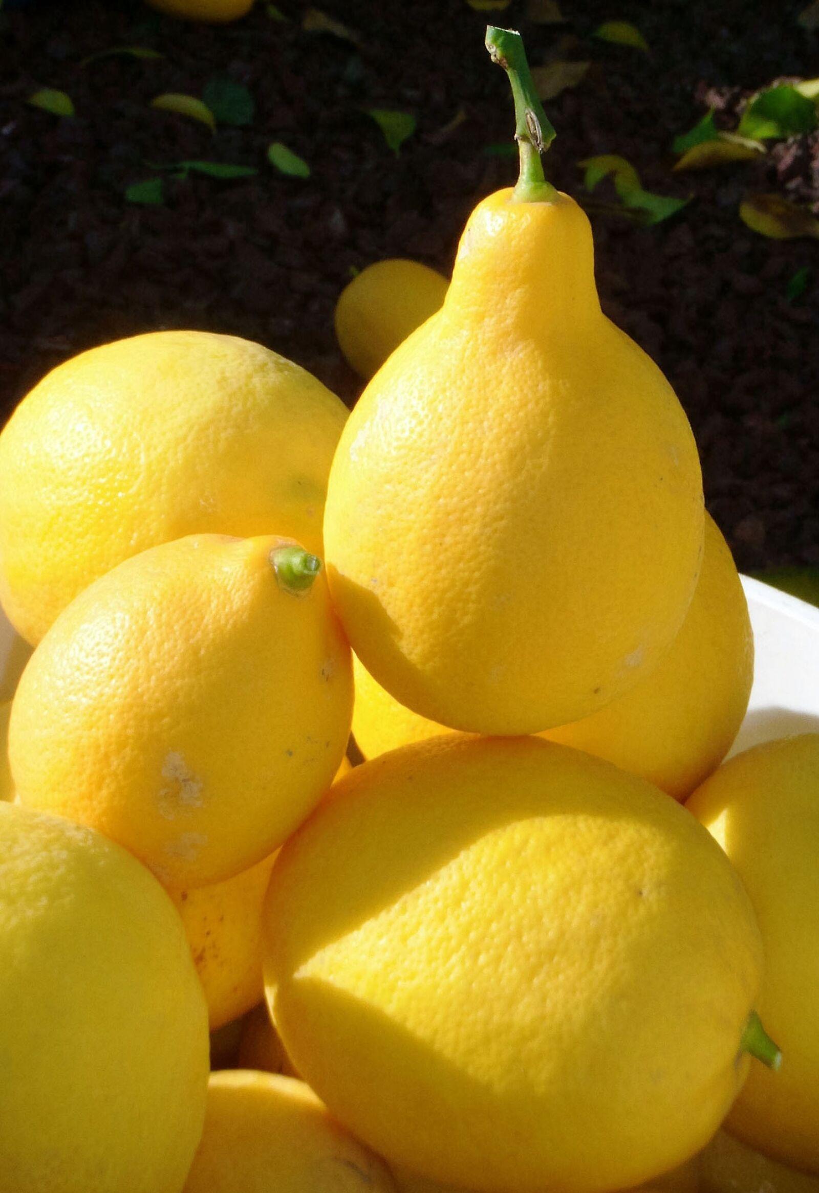 lemons, harvest, fruit