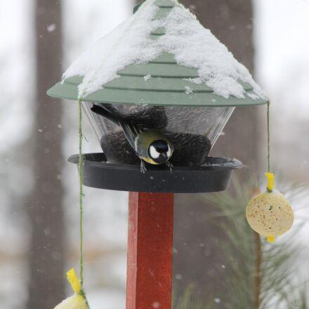 feeding the birds, winter, Canon EOS 600D
